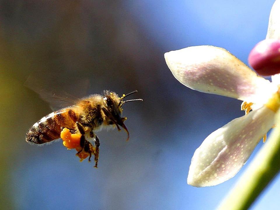 Máte rádi med?