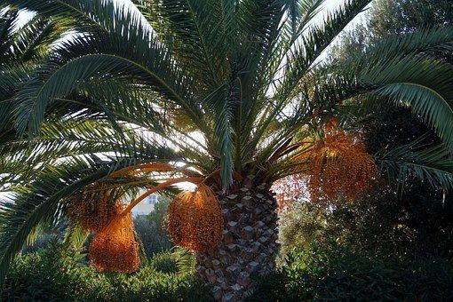 datle palma