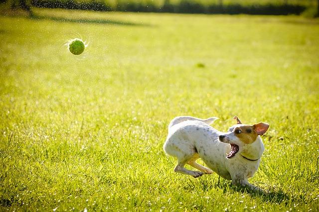 míček a pes
