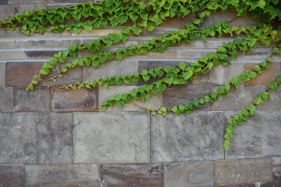 rostliny na zdi